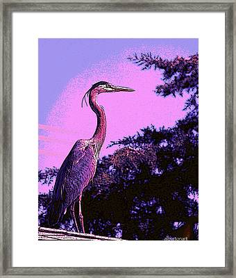 Colorful Heron Framed Print