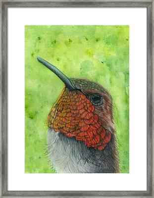 Colorful Hmmingbird Framed Print by Jennifer Campbell Brewer