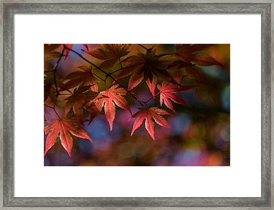 Colorful Japanese Maple Framed Print by Lori Coleman