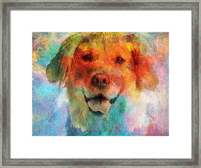 Colorful Lab Framed Print by Dan Sproul