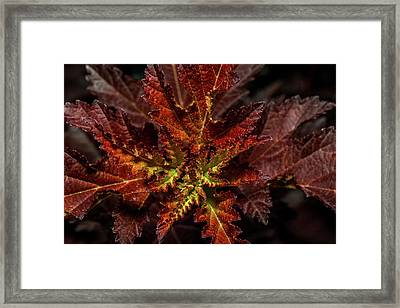 Framed Print featuring the photograph Colorful Leaves by Paul Freidlund