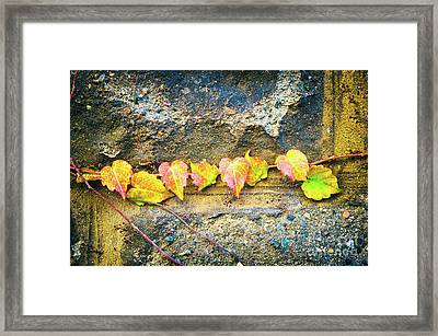 Colorful Leaves Framed Print by Silvia Ganora