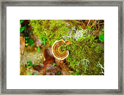 Colorful Lichen Framed Print by Jeff Swan