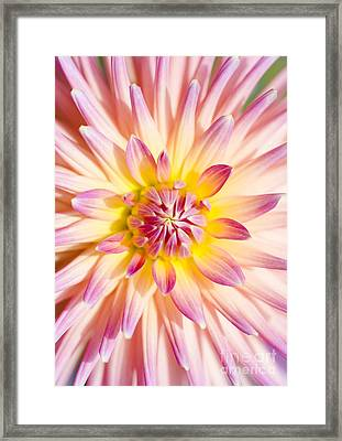 Colorful Macro Dahlia Flower. Beauty In Springtime Framed Print by Jorgo Photography - Wall Art Gallery
