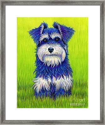 Colorful Miniature Schnauzer Dog Framed Print