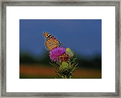 Framed Print featuring the photograph Colorful Monarch by Sandy Keeton