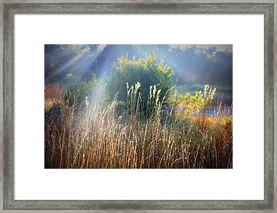 Colorful Morning Marsh Framed Print