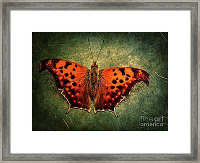 Colorful Orange Butterfly Framed Print