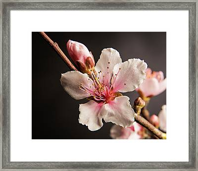 Colorful Peach Blooms 5535.02 Framed Print