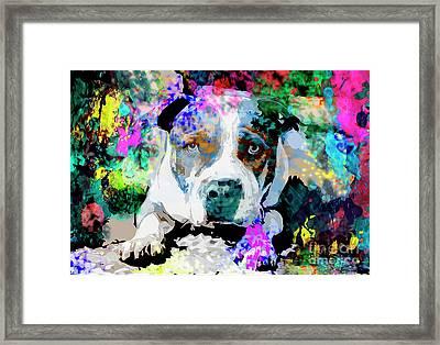 Colorful Pitbull Framed Print by Jon Neidert