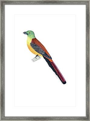 Colorful Pitingers Framed Print