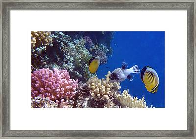 Colorful Red Sea Fish And Corals Framed Print