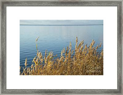 Colorful Reeds Framed Print