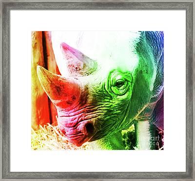 Colorful Rhinoceros Framed Print by Srikanth Tirunagari