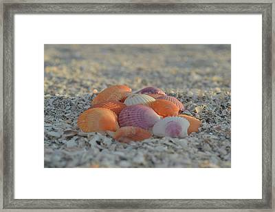 Framed Print featuring the photograph Colorful Scallop Shells by Melanie Moraga