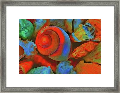Colorful Sea Shells Framed Print by Georgiana Romanovna
