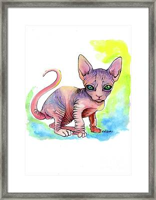 Colorful Sphynx Framed Print