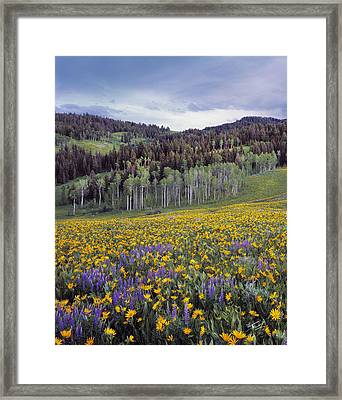 Colorful Spring Meadow Framed Print by Leland D Howard