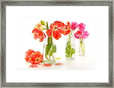 Colorful Spring Tulips In Old Milk Bottles Framed Print by Sandra Cunningham