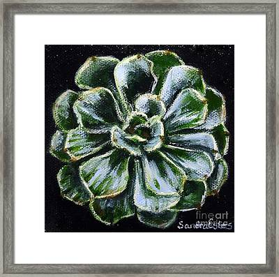 Colorful Succulent Framed Print