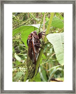 Colorful Summer Cicada Framed Print