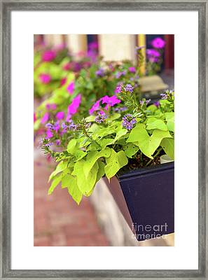 Colorful Summer Flowers In Window Box Framed Print