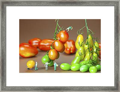 Framed Print featuring the photograph Colorful Tomato Harvest Little People On Food by Paul Ge