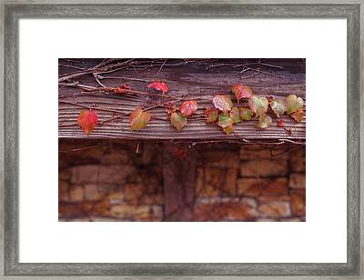 Colorful Tree Leaves Changing Color For Auyumn,fall Season In Oc Framed Print