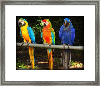 Colorful Trio Framed Print