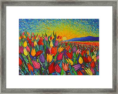 Colorful Tulips Field Sunrise - Abstract Impressionist Palette Knife Painting By Ana Maria Edulescu Framed Print