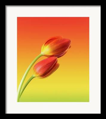 Flower Stems Framed Prints