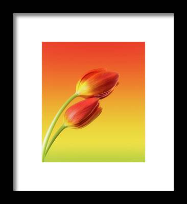 Romantic Flower Framed Prints