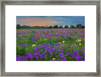 Colorful Wildflowers Of Texas 1 Framed Print by Rob Greebon