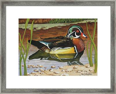 Colorful Wood Duck Framed Print by Phil Hopkins