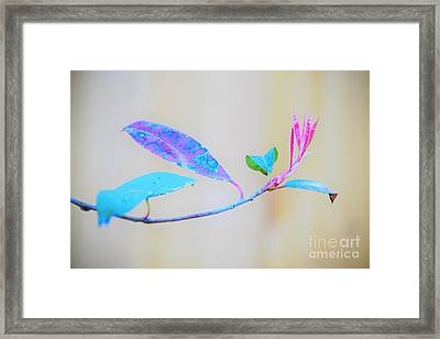 Colorfully Designed Framed Print