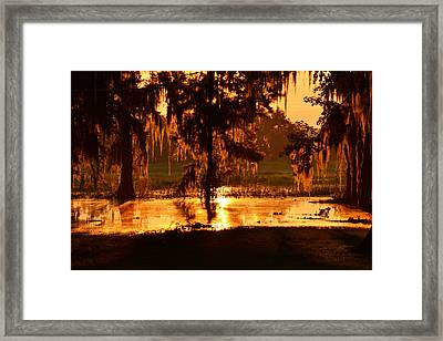 Coloring The Swamp With Sunrise Framed Print