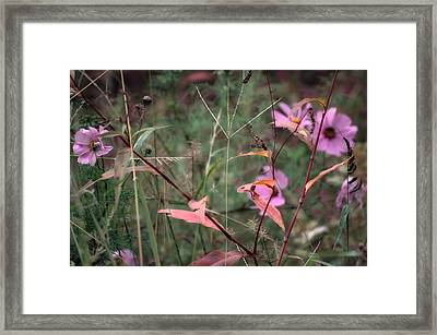 Colorization Of Autumn Framed Print by Ross Powell