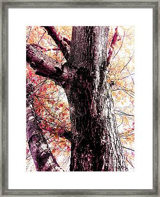 Colors And Texture  Framed Print
