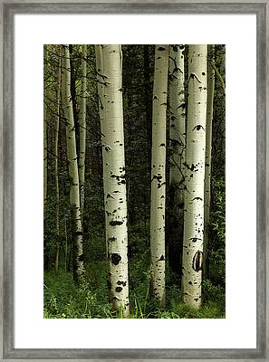 Framed Print featuring the photograph Colors And Texture Of A Forest Portrait by James BO Insogna
