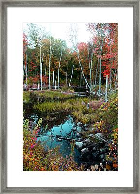 Framed Print featuring the photograph Colors By The Stream by Joseph G Holland