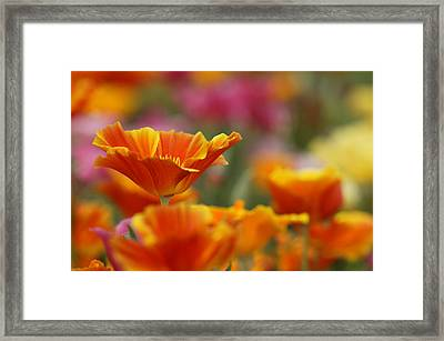 Colors Framed Print by Eggers Photography