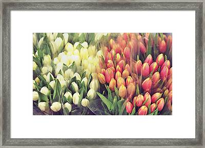 Colors In Gauze Framed Print by JAMART Photography