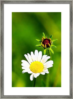 Colors In Time Framed Print by William Furguson