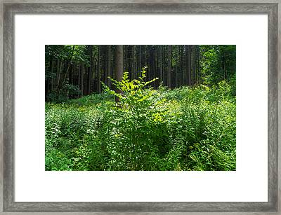 Colors Of A Forest In Vogelsberg Framed Print