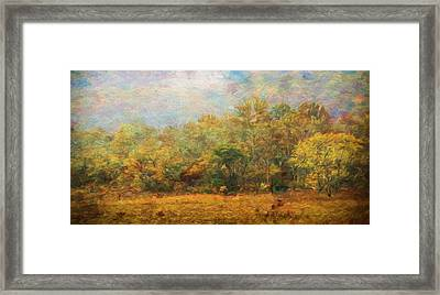 Colors Of Autumn In The Forest Framed Print
