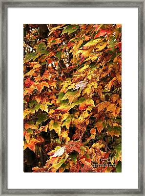Colors Of Autumn Framed Print by John Rizzuto
