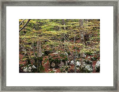 Colors Of Autumn Framed Print by Luigi Morbidelli
