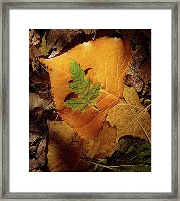 Framed Print featuring the photograph Colors Of Autumn by Marie Leslie