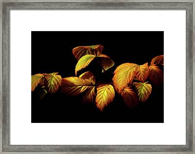 Colors Of Autumn Memories  Framed Print