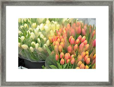 Colors Of Gauze Framed Print by JAMART Photography